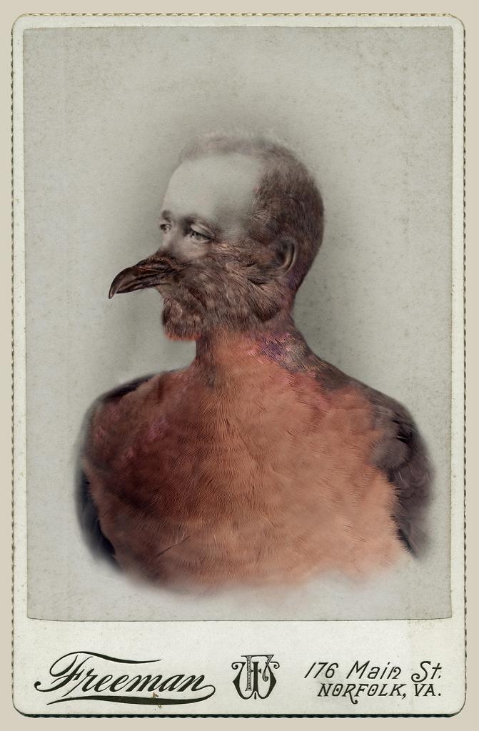 aviary_mpigeon